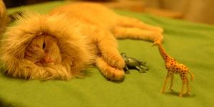 cat as lion